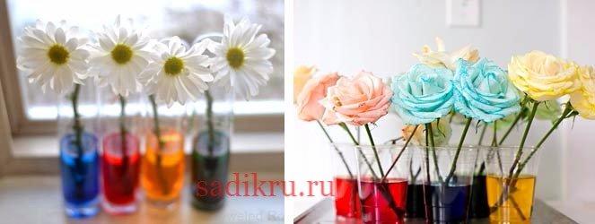 Игра - наблюдение смена окраса цветов