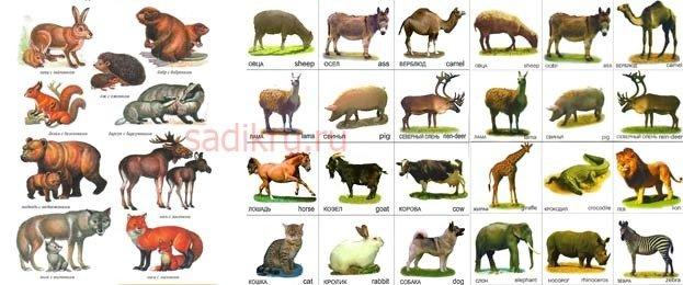Картинки - помощники с изображениями животных